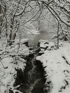 Stunning image - ice stream at Sherwood Forest center parcs March 2013