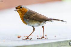 something wrong? - robin