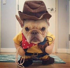 'Dexter' the French Bulldog, as 'Woody' from Toy Story for Halloween.