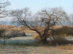 Auch im Winter unbedingt einen Besuch wert: Loddiner Höft am Achterwasser.