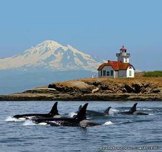 Whale Watching Adventure / Friday Harbor Cruise, Bellingham, Washington Whale Watching
