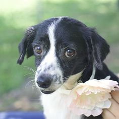 Poodle and Pooch Rescue has small dogs for adoption in Florida