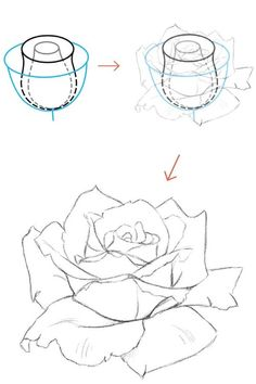 How to draw flowers and turn these drawings into really cool wall art - Craft-Mart how to draw a rose step by step drawing guide. Learn how to draw flowers like roses of lilies and turn them into really beautiful wall art. Flower Drawing Tutorials, Flower Sketches, Drawing Tips, Art Tutorials, Rose Sketch, Roses Drawing Tutorial, Drawing Techniques, Pencil Art Drawings, Art Drawings Sketches