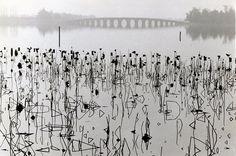 René BURRI :: Dead Lotus Flowers on the Kunming Lake, Former Imperial Summer Palace, 1964