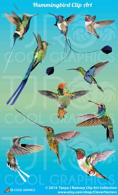 Hummingbird Clip Art by CleverVectors on Etsy, $4.25