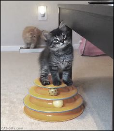 KITTEN GIF • Cute Kitten wants to get up on the table but he can't do it