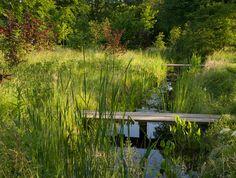 Sussex Farm - Jinny Blom - riparian garden