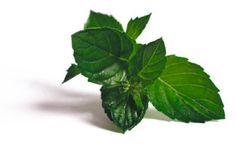 Una deliciosa receta deAceite de mentapara #Mycookhttp://www.mycook.es/receta/aceite-de-menta/