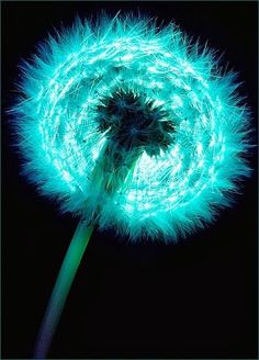dandelion before the wind. I love dandelions and turquoise so its a perfect fit! Shades Of Turquoise, Shades Of Blue, Teal Blue, Fifty Shades, Foto Macro, Dandelion Wish, Dandelion Seeds, Auras, Fractals