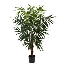 Bulb Areca Silk Tree - 4.5 Feet Tall ** Details can be found by clicking on the image.