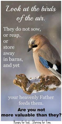 New Ideas Bird Quotes Bible Eyes Scripture Verses, Bible Scriptures, Bird Quotes, How He Loves Us, Favorite Bible Verses, Gods Promises, Spiritual Inspiration, Christian Inspiration, Heavenly Father