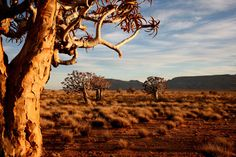 The Karoo-South Africa Trip Planning, Planning Board, Africa Travel, Land Scape, Google Images, South Africa, Travel Inspiration, Places To Go