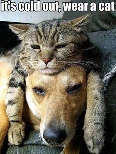 Funny images of the day (65 pics) It's Cold Out, Wear A Cat