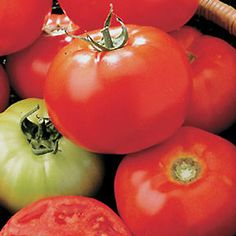 Growing Tomatoes and Tomato Growing Tips: A complete guide on how to grow tomatoes that are perfect and flavorful.