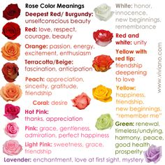 Pink Light Common Rose Color Meanings For Deepest Red Burgundy And White