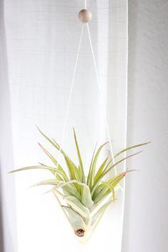 DIY Hängepflanzen, air plant, tillandsie, geometric planter