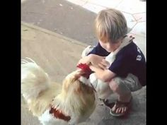 have you hugged your chicken today - Yahoo Video Search Results