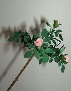 how to: rosebush