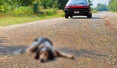 Mujer recibe un disparo luego de atropellar a un perro y no prestarle ayuda | Seamos Mas Animales Como Ellos Shots, Destiny, Dogs, Animales, Women