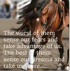 horse photos with quotes | fears or dreams? | Horse Quotes