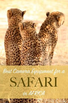 Best camera equipment for safari in Africa