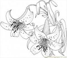 find this pin and more on riscos para pintura em tecido lily 5 coloring page