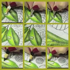 Jardim Secreto by eileen Secret Garden Coloring Book, Coloring Book Art, Coloring Tips, Adult Coloring Pages, Leaf Coloring, Colored Pencil Tutorial, Colored Pencil Techniques, Coloring Tutorial, Polychromos