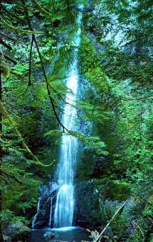 Marymere Fall's near Port Angeles WA Be like water, flow with life and don't be afraid to fall.