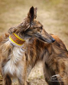 Silken Windhound. By Julie Poole.