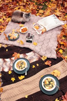 cat on a picnic! via http://chestnutmocha.blogspot.com/2012/10/picnic-lunch-in-yard.html #picnic #cat #autumn #leaves