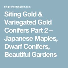 Siting Gold & Variegated Gold Conifers Part 2 – Japanese Maples, Dwarf Conifers, Beautiful Gardens