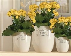 Sunshine And Flowers Pots from the Next UK online shop