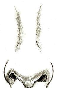 Как нарисовать нос человека, шаг 5