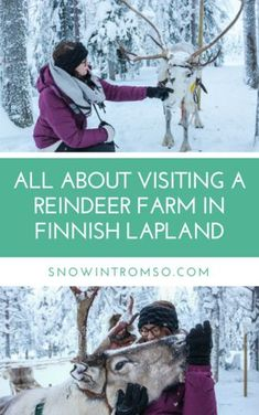 Would you like to pet a reindeer one day? takes you on a virtual trip to a reindeer farm in Finnish Lapland! Lappland, Polar Night, Visit Norway, Norway Travel, Tromso, Arctic Circle, Light Of Life, Lofoten, Winter Travel