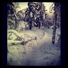 Snow snow snow Arctic, Finland, Sweden, Snow, Travel, Outdoor, Outdoors, Viajes, Traveling
