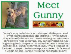 Gunny needs a forever home! @Pet Savers Shreveport #shelters #adoptdontshop