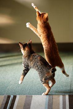 Gatitos saltando