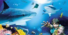 SEA Life - Gewinne einen echten Hai als Freund ;-)