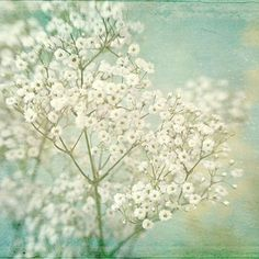 Babys Breath Photograph Boho Decor Cottage Chic Shabby Chic Home Pastel W Shabby Chic Wall Decor, Shabby Chic Homes, Boho Decor, French Country Wall Decor, French Country Decorating, Mint Bedroom Walls, White Flowers, Beautiful Flowers, White Lace