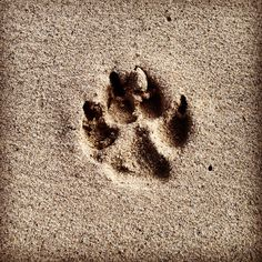 All footprints in the sand get washed away eventually, but footprints on your heart stay forever