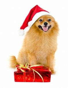 The holidays will be extra good for pets this year. The majority of parents will spend the same or more on their pets, according to a survey by Petplan.