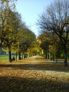 Country Roads, Vienna