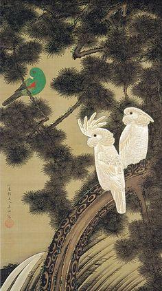 Ito Jakuchu 動植綵絵 Doshoku Sai-e,Title:老松鸚鵡図 Rosho Omu-zu(Old Pine Tree and Cockatoos) c.1760
