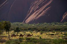 Uluru, Northern Territory, Austrália #Uluru #NorthernTerritory #Australia