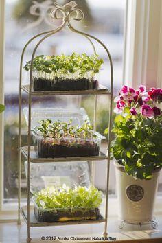 Cake Stand...herb garden