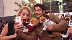 No pre-show, havia uns cachorrinhos fofos, vestidos a rigor e tirando selfies com as celebs. Rita Ora curtiu: