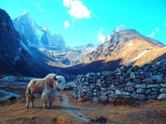 Mt Everest, Nepal. Photo by Trent Marshall