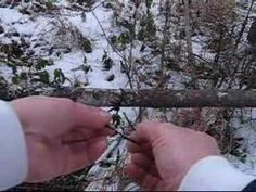 Snaring Rabbits - How to Set a Rabbit Snare