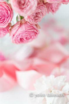 Pink Rose- M-Minerva