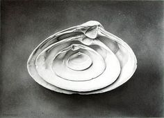 'Refuge' (graphite) - John Whalley